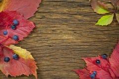 Belle foglie su fondo di legno d'annata, progettazione del confine tono d'annata di colore - concetto delle foglie di autunno nel Fotografie Stock
