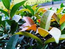 Belle foglie variopinte create di natura fotografia stock libera da diritti