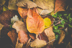 Belle foglie variopinte di autunno sulla terra Fotografia Stock Libera da Diritti