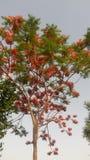 Belle foglie verdi dei fiori della natura Fotografia Stock