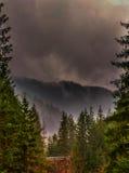 belle forêt Images libres de droits