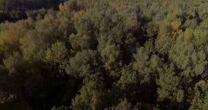 Belle forêt aérienne d'automne clips vidéos