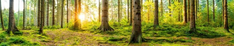 Belle forêt au lever de soleil image stock