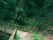 Belle forêt avec de beaux arbres Photo stock