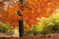 Belle forêt brumeuse Photo libre de droits