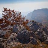 Belle forêt d'automne Photo libre de droits
