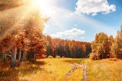 Belle forêt d'automne au jour ensoleillé Photos libres de droits