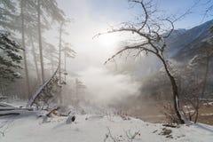 Belle forêt d'hiver Photo stock