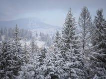 Belle forêt d'hiver Photos libres de droits
