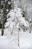 Belle forêt d'hiver après la neige tombée Images libres de droits