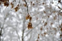 Belle forêt d'hiver après la neige tombée Images stock