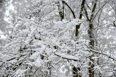 Belle forêt d'hiver après la neige tombée Image stock