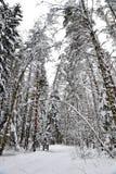 Belle forêt d'hiver après la neige tombée Photo stock
