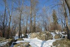Belle forêt d'hiver avec les blocs en pierre Images stock