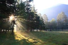 Belle forêt dans la lumière de matin Photographie stock libre de droits