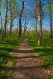 Belle forêt dans le soleil de matin Photo stock