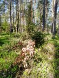 Belle forêt dans un matin images libres de droits