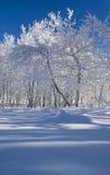 Belle forêt de l'hiver Photo stock