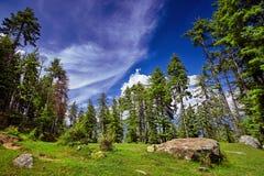 Belle forêt de montagne sur le fond de ciel bleu Kullu val Images stock
