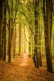 Belle forêt de ressort Photo libre de droits