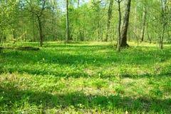 Belle forêt de source Photo stock