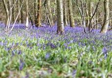 Belle forêt de source Photo libre de droits