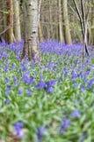 Belle forêt de source Photos stock