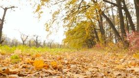 Belle forêt en automne La caméra subjective avance Mouvement lent clips vidéos