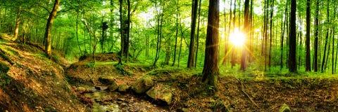 Belle forêt en soleil lumineux photos stock