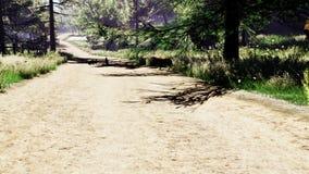 Belle forêt ensoleillée avec des animaux en premier ressort banque de vidéos