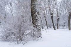 Belle forêt large d'arbre de pin et de bouleau couverte dans la neige b photo stock