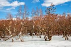 Belle forêt lisse de glace au printemps images libres de droits