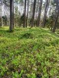 Belle forêt pendant le matin photos libres de droits