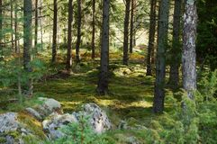 Belle forêt suédoise qui donne une Lisa à l'âme image stock