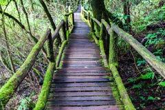 Belle forêt tropicale à l'itinéraire aménagé pour amateurs de la nature d'angka en parc national d'inthanon de doi, Thaïlande Photographie stock