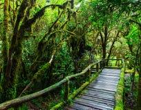 Belle forêt tropicale à l'itinéraire aménagé pour amateurs de la nature de ka d'ANG Photo stock
