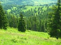 Belle forêt verte Images libres de droits