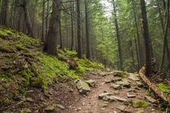 Belle forêt verte avec un sentier piéton Photo libre de droits