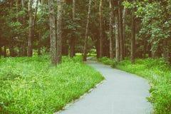 Belle forêt verte en été forêt verte d'été, champ de courses au milieu de la forêt, forêt de pin photographie stock