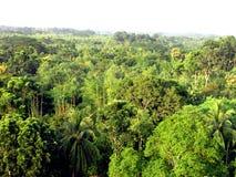 Belle forêt verte sous le ciel image libre de droits