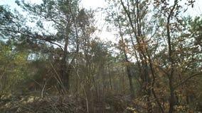 Belle foresta e colline della molla stock footage