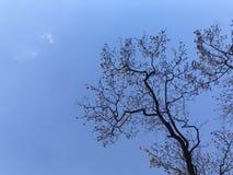 Belle forme d'arbres avec le ciel bleu lumineux dans la lumière de jour naturel de la vue d'angle faible Image stock