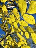 Belle foudre dans les arbres dans le temps de chute illustration de vecteur