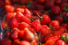 Belle fraise rouge Image stock
