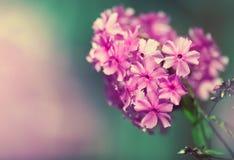Belle frontière florale des fleurs roses image libre de droits