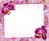 Belle frontière rose d'orchidées pour la carte de voeux ou le beau cadre de fleur Image stock
