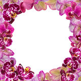 Belle frontière rose d'orchidées pour la carte de voeux ou le beau cadre de fleur Images libres de droits