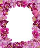 Belle frontière rose d'orchidées pour la carte de voeux ou le beau cadre de fleur Image libre de droits