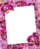 Belle frontière rose d'orchidées pour la carte de voeux ou le beau cadre de fleur Images stock