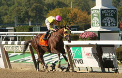 Belle Gallantey Wins The Beldame Stakes Stock Photography